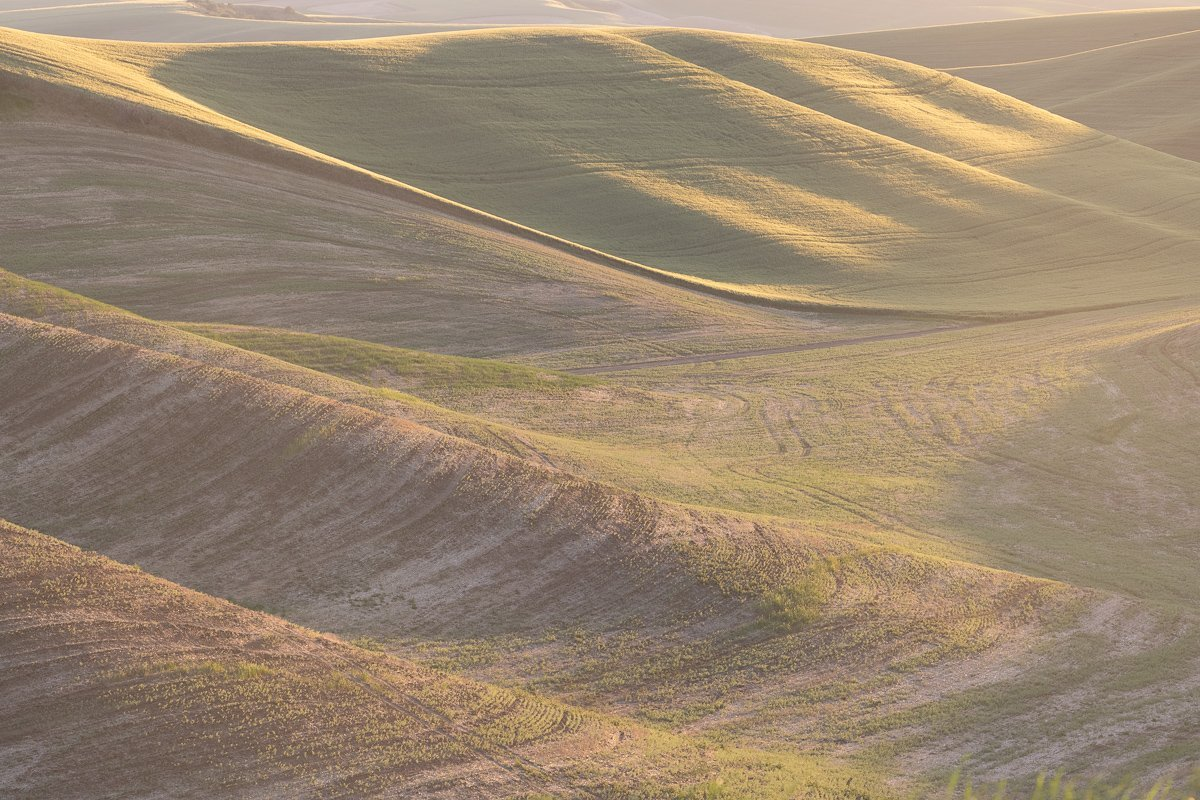 Late-Afternoon-Sun-on-Rolling-Hills