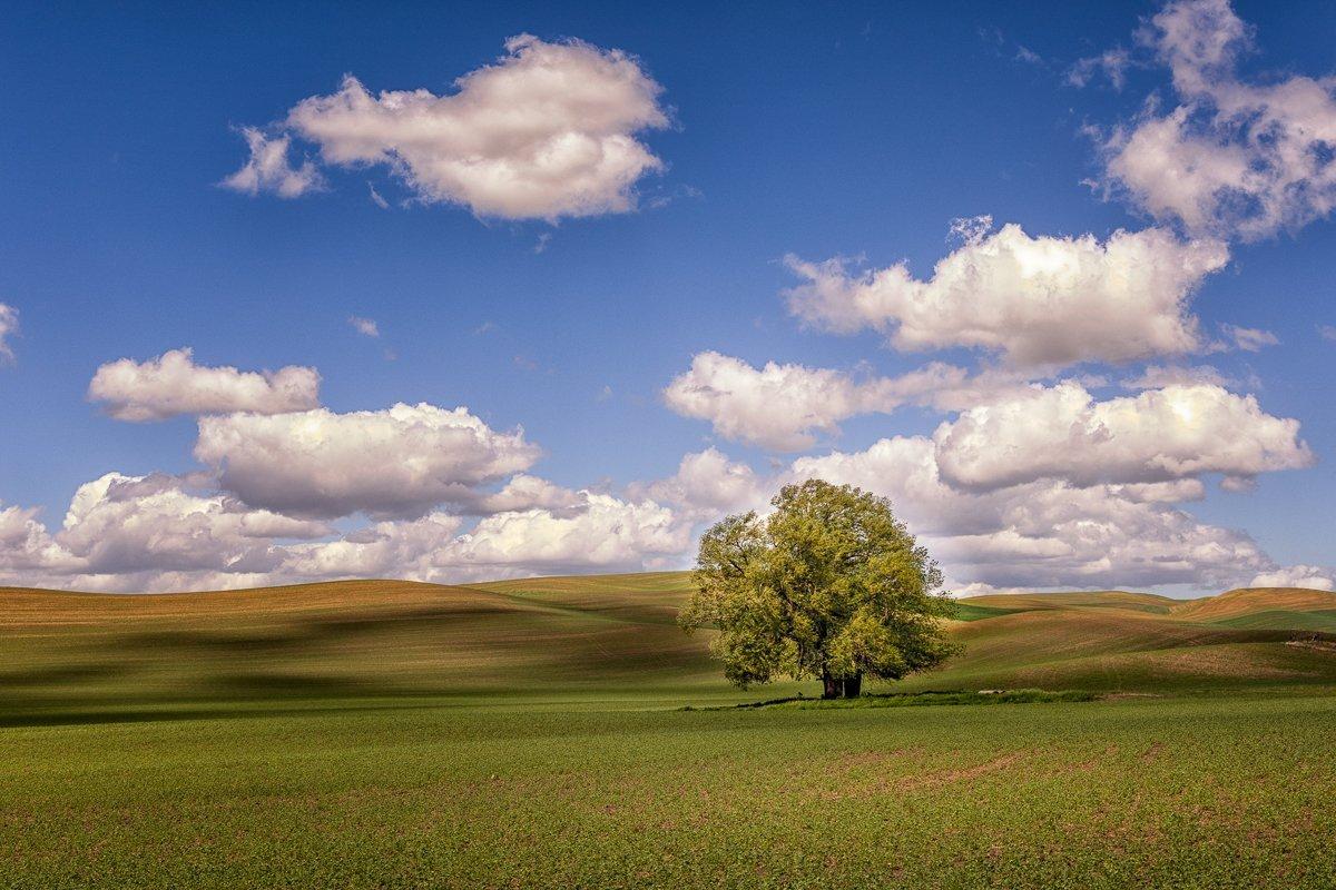 Single-Tree-Clouds