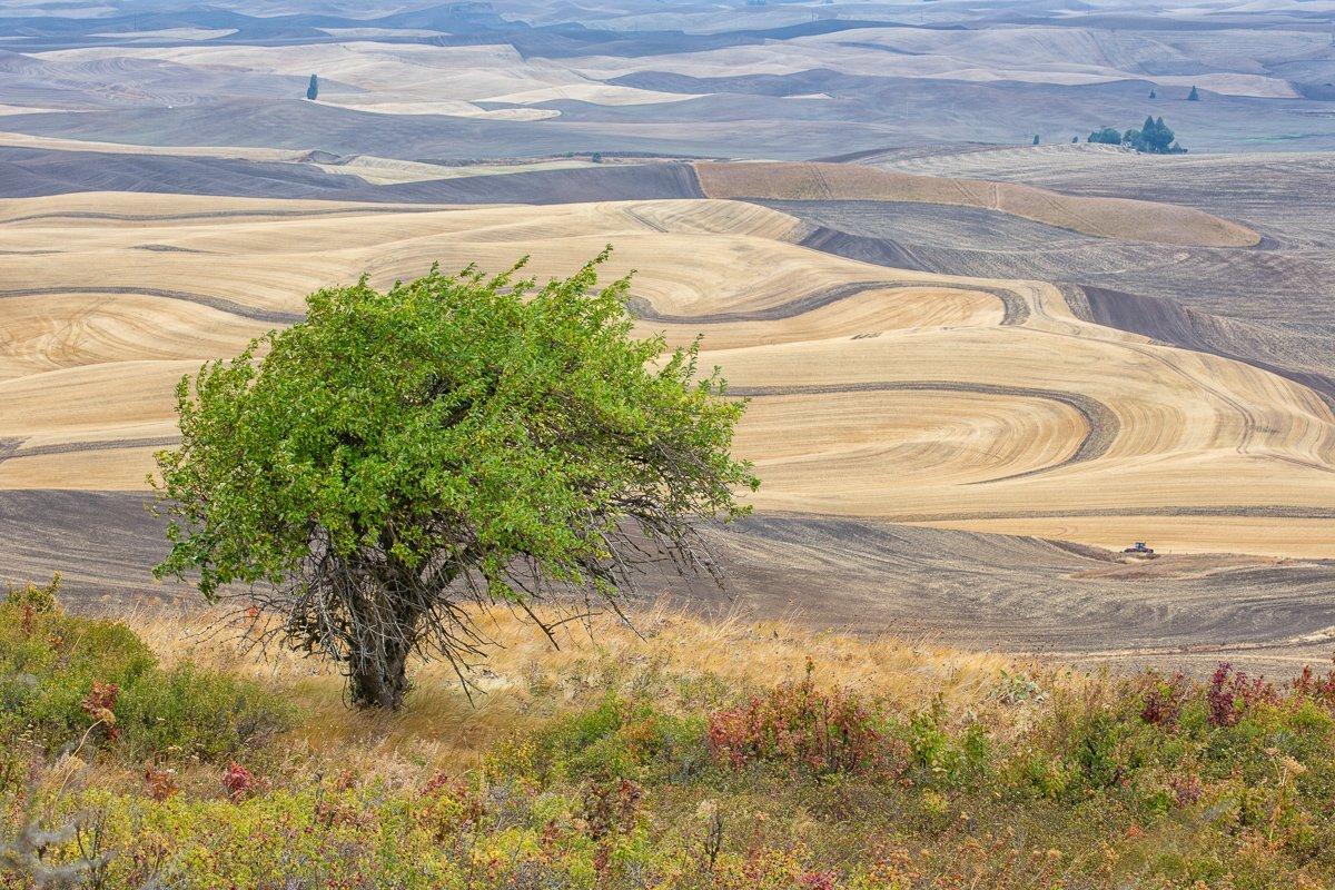 Steptoe-Tree-View