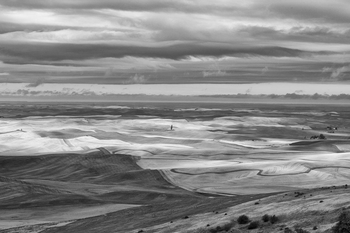Steptoe-View-Single-Tree-Clouds