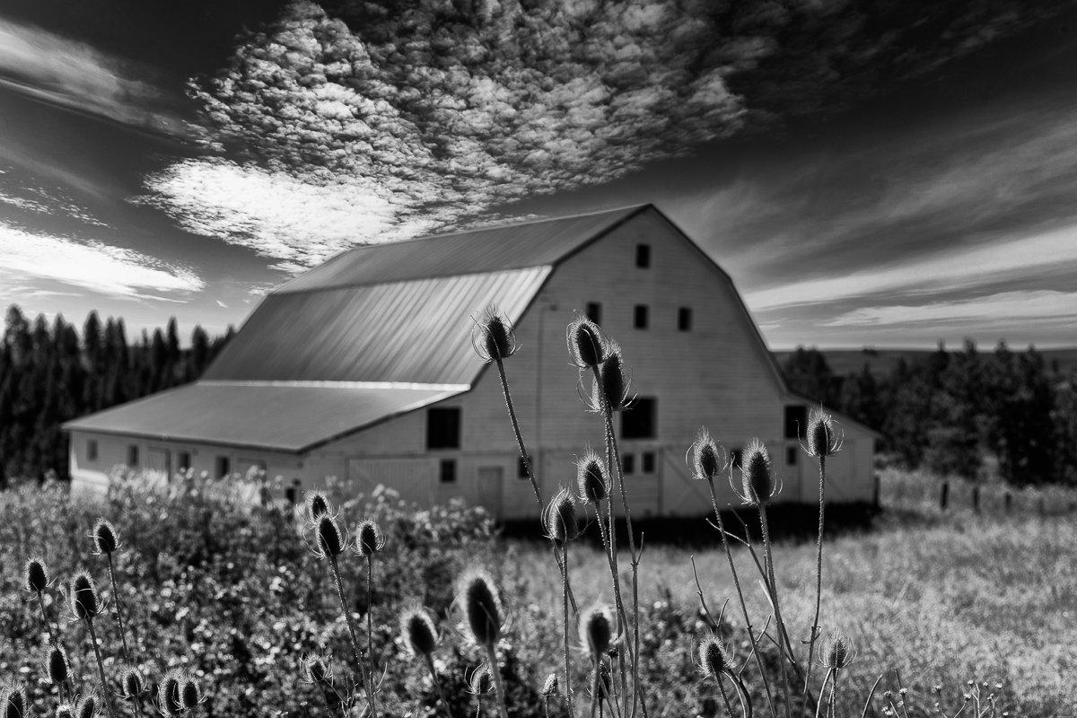 1_White-Barn