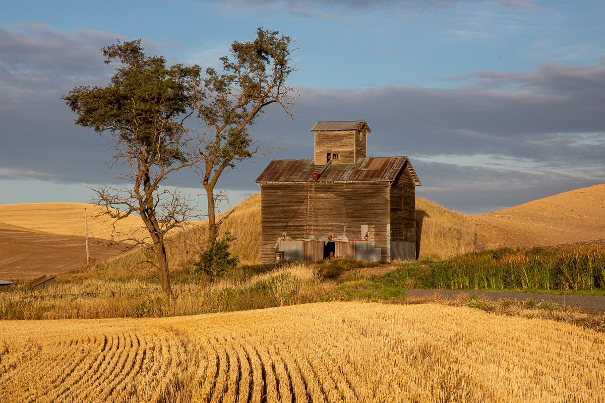 Old-Barn-Trees-Late-Afternoon-Gold