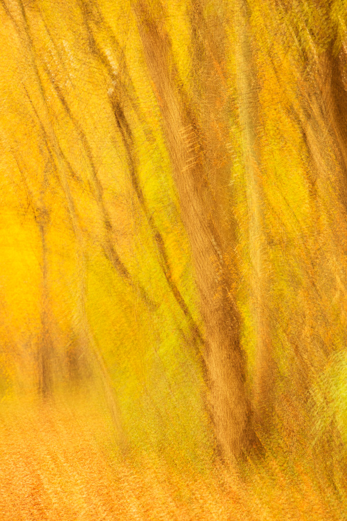 131128_Walk in the Forrest_Abstract by Karl Graf.