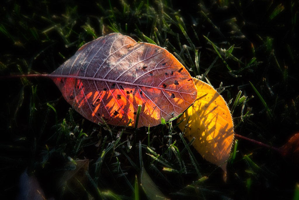 131206_Fall_Leaves in the Grass by Karl Graf.