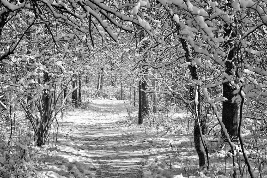 131212_PV_Path in the Woods 3 by © 2013 Karl Graf.