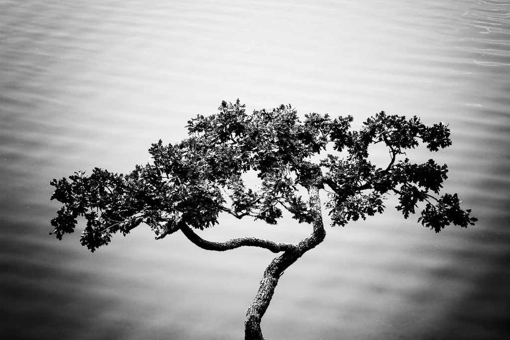 131227_Lone Tree (1 of 1) by Karl G. Graf.
