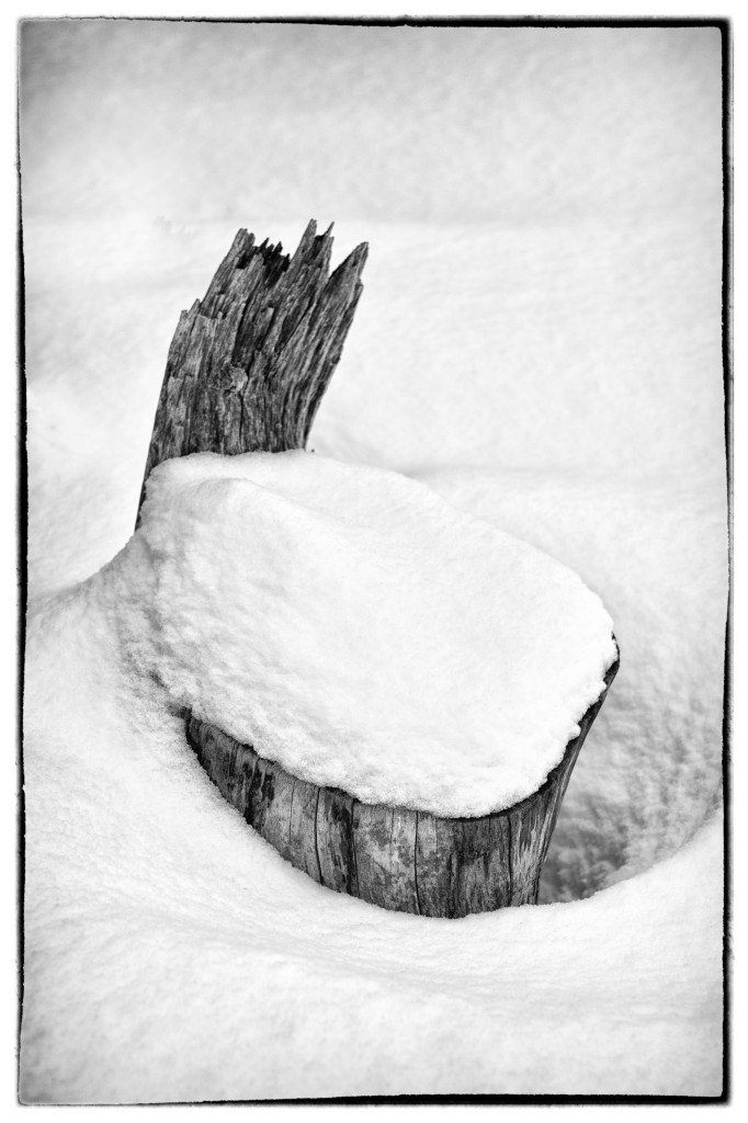 140221_Stump in Snow 1 by © 2013 Karl Graf.