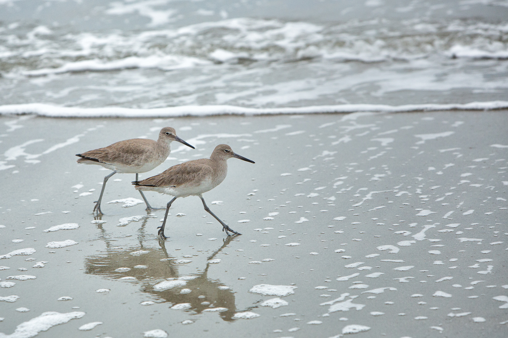 140226_SandPipers by Karl Graf.