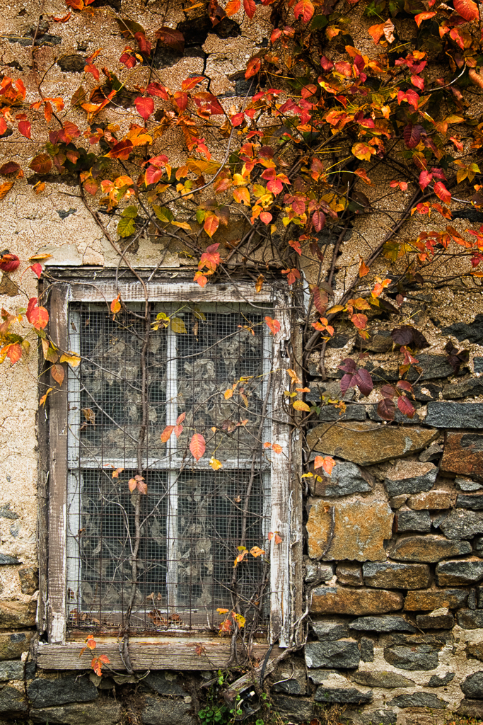 141029_Window & Leaves by .