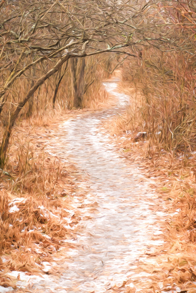 150118_Path in the Woods by .