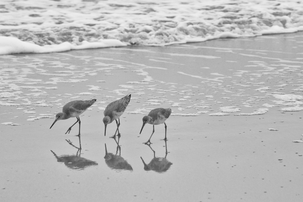 150223_3SeaGulls_Hilton Head by Karl Graf.
